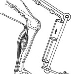 spinta venosa gamba